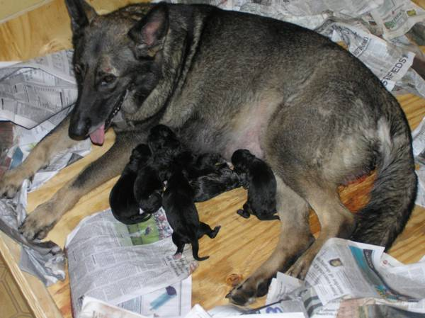 Magda and PUps